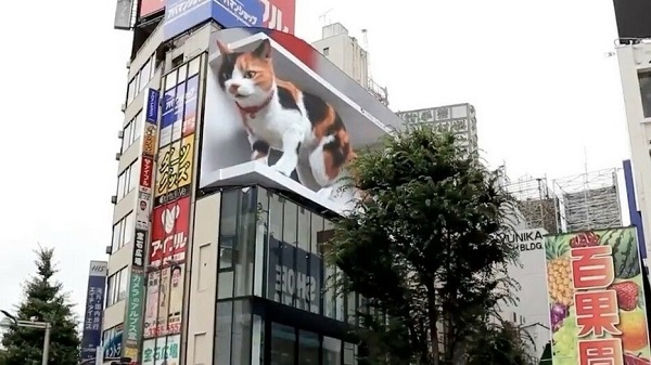 ビルから飛び出す3D猫